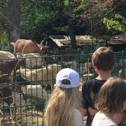 Parc animalier Pierre Challandes - Bellevue