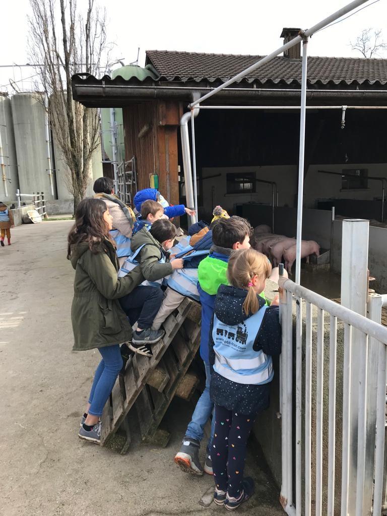 Naf-naf, Nif-nif et Nouf-nouf à la porcherie de Genthod