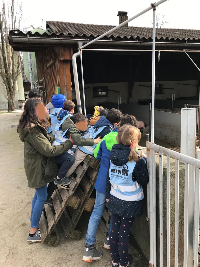 Porcherie ferme de Genthod