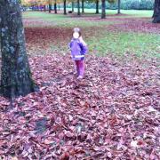 Marion cherche des truffes...